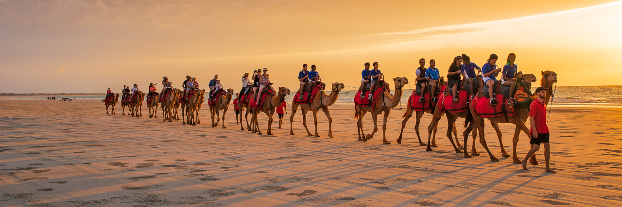 Camels at sunset on Cable Beach Broome